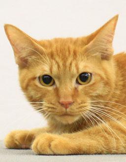 エムドッグス,動物プロダクション,ペットモデル,ペットタレント,モデル猫,タレント猫,MIX,月
