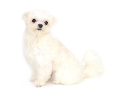 エムドッグス,動物プロダクション,ペットモデル,ペットタレント,モデル犬,タレント犬,MIX,むく