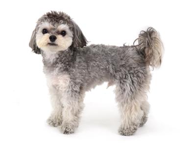 エムドッグス,動物プロダクション,ペットモデル,ペットタレント,モデル犬,タレント犬,MIX犬,ジェラ