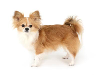 エムドッグス,動物プロダクション,ペットモデル,ペットタレント,モデル犬,タレント犬,MIX,はな