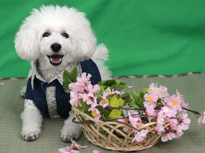 エムドッグス,動物プロダクション,ペットモデル,ペットタレント,モデル犬,タレント犬,初級育成講座