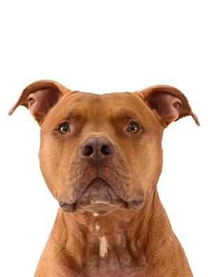 エムドッグス,動物プロダクション,ペットモデル,ペットタレント,モデル犬,タレント犬,MIX犬,カイ
