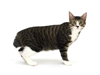 エムドッグス,動物プロダクション,ペットモデル,ペットタレント,モデル猫,タレント猫,MIX,mix,なつき,夏希