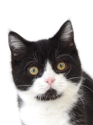 エムドッグス,動物プロダクション,ペットモデル,ペットタレント,モデル猫,タレント猫,MIX
