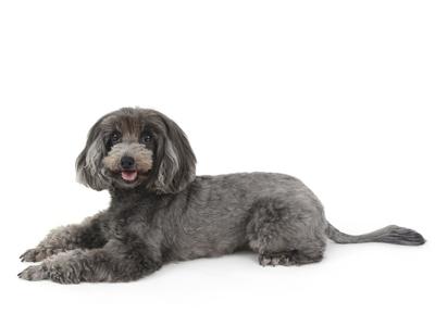 エムドッグス,動物プロダクション,ペットモデル,ペットタレント,モデル犬,タレント犬,夏空,そら