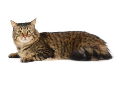 エムドッグス,動物プロダクション,ペットモデル,ペットタレント,モデル猫,タレント猫,mix,ミックス,しなもん