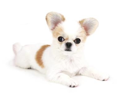 エムドッグス,動物プロダクション,ペットモデル,ペットタレント,モデル犬,タレント犬,MIX犬,ちょも