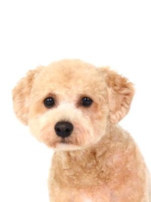 エムドッグス,動物プロダクション,ペットモデル,ペットタレント,モデル犬,タレント犬,MIX犬,Elmo,エルモ