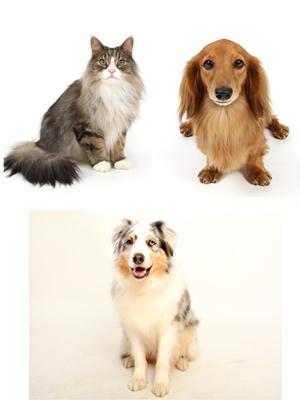 エムドッグス,動物プロダクション,ペットモデル,ペットタレント,モデル犬,タレント犬,ノルウェージャン,Guri,ミニチュアダックスフンド,オルテンシア,オーストラリアンシェパード,Crush