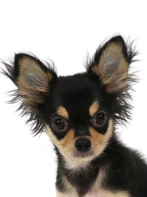 エムドッグス,動物プロダクション,ペットモデル,ペットタレント,モデル犬,タレント犬,MIX犬,Gemme,ジェン
