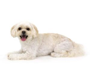 エムドッグス,動物プロダクション,ペットモデル,ペットタレント,モデル犬,タレント犬,MIX犬,空,くう