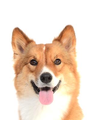 エムドッグス,動物プロダクション,ペットモデル,ペットタレント,モデル犬,タレント犬,MIX犬,マカロン
