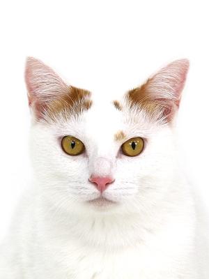 エムドッグス,動物プロダクション,ペットモデル,ペットタレント,モデル猫,タレント猫,MIX猫,こはく
