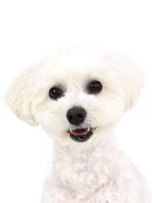 エムドッグス,動物プロダクション,ペットモデル,ペットタレント,モデル犬,タレント犬,MIX犬,LEA,レア