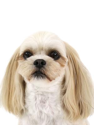 エムドッグス,動物プロダクション,ペットモデル,ペットタレント,モデル犬,タレント犬,MIX犬,うめ