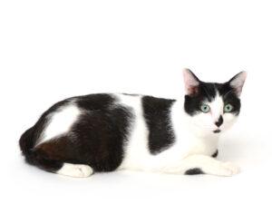 エムドッグス,動物プロダクション,ペットモデル,ペットタレント,モデル猫,タレント猫,MIX猫,うる